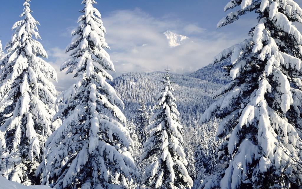 padure_brazi_iarna