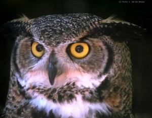 B_owl-face